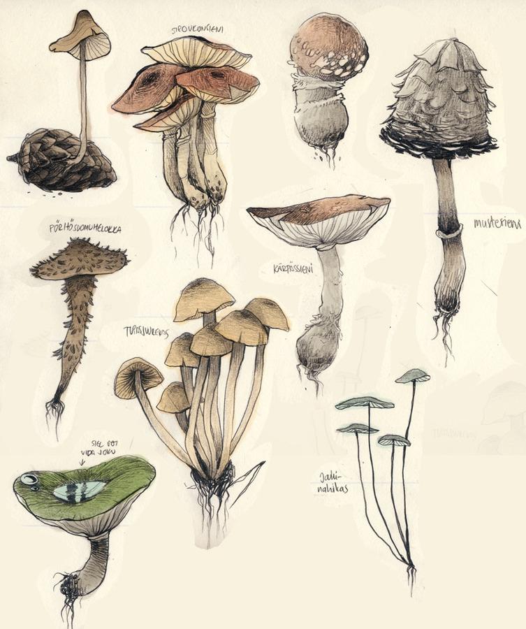 mushrooms.jpg?expires=1568416323-signature=snwu2p8h4n3wyycqcfngvr4p4agcg-5dv3gze7w5vniclydqjutry6quxqyns7qkw-ql4eun5dc5n-psl...