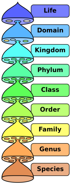 460px-biological_classification_l_pengo_vflip.svg.png