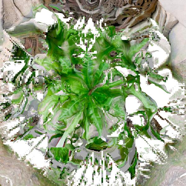 21_plant_2.jpg