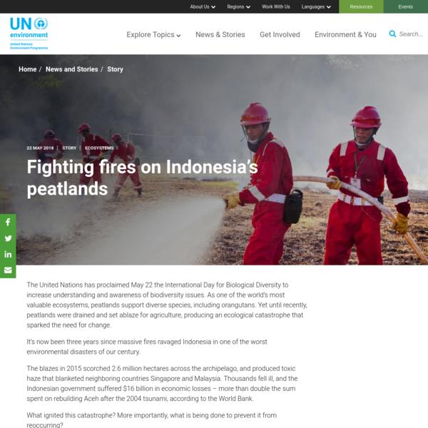 Fighting fires on Indonesia's peatlands