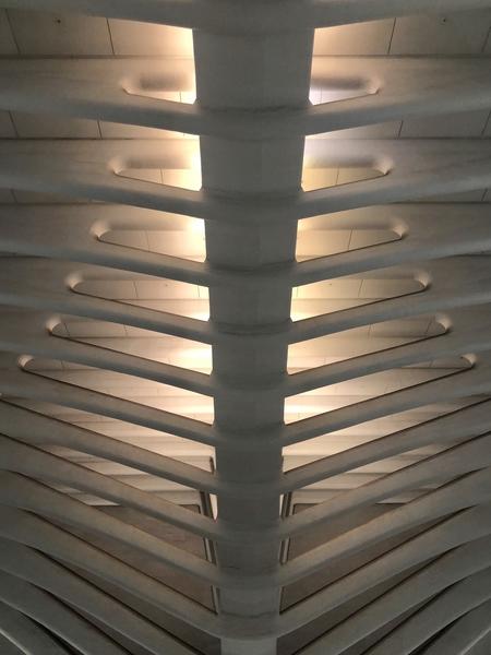 Illuminating Rib Cage