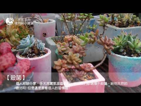 荳荳多肉植物與小雜貨 下雨篇