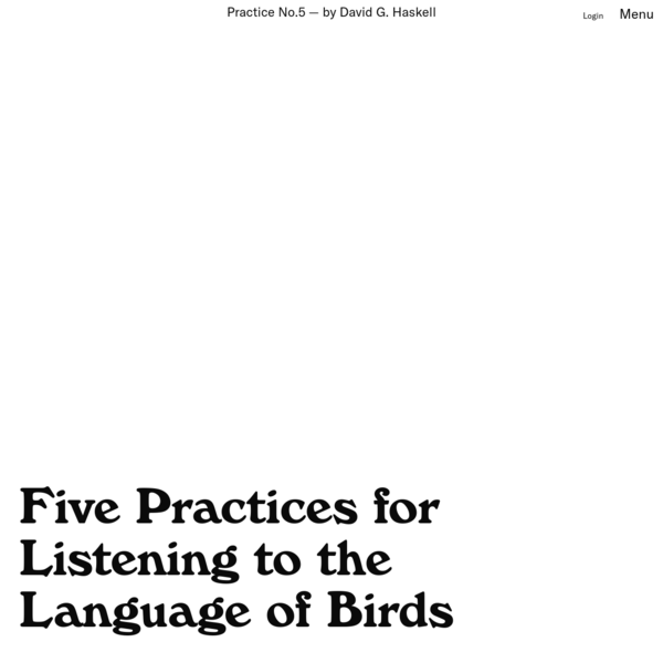 Five Practices for Listening to the Language of Birds - Emergence Magazine
