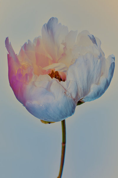 0000_071319_flowers8454.jpg