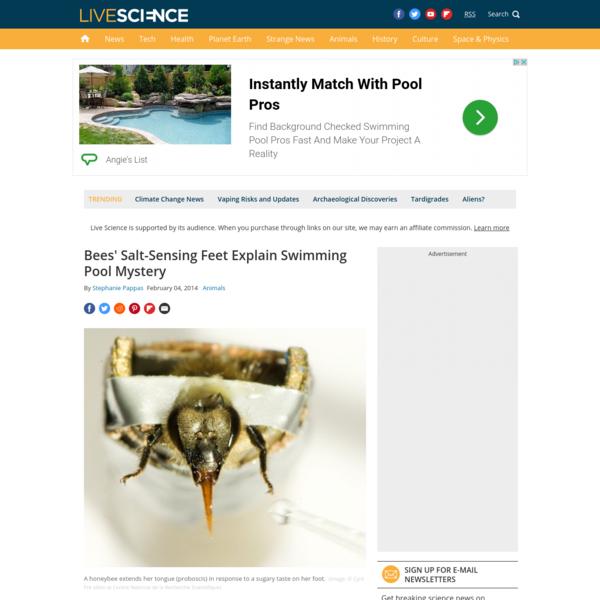 Bees' Salt-Sensing Feet Explain Swimming Pool Mystery