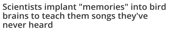 """Scientists implant """"memories"""" into bird brains to teach them songs they've never heard"""
