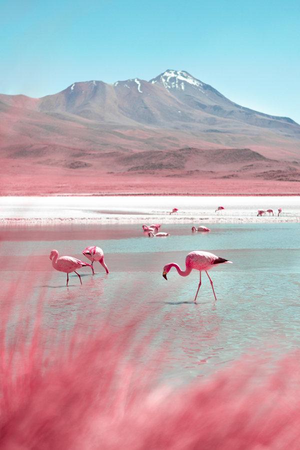 Landscape | Pink | Animal | Flamingo | Lake | Mountain 3a392f85911149.5d8a244598aa3.jpg