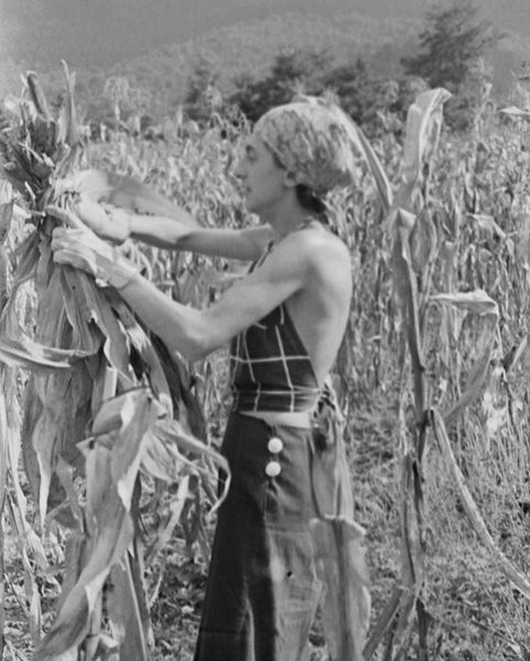 Anni Albers's strength and style shines in this photograph of her harvesting corn as a faculty member of Black Mountain College, in Asheville, North Carolina.