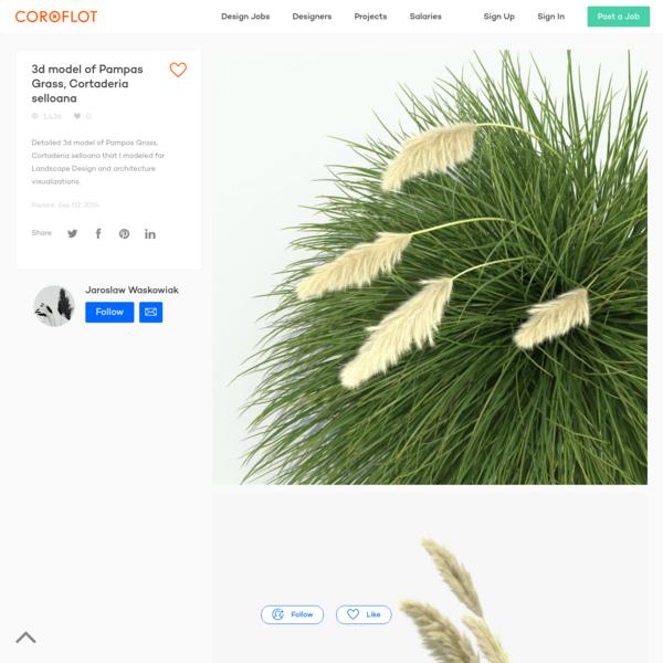 3d model of Pampas Grass, Cortaderia selloana