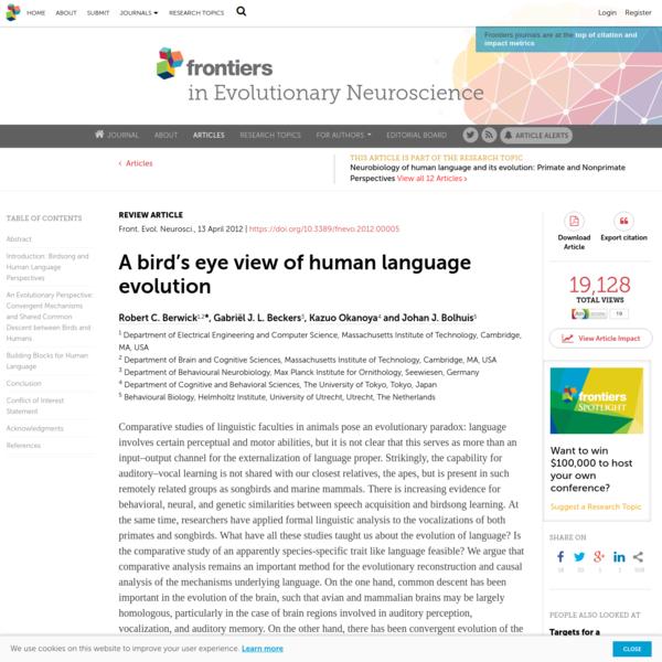 A Bird's Eye View of Human Language Evolution