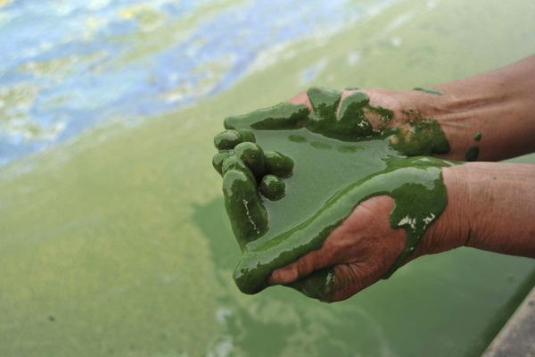 algae-pollution-lake-china_9602_600x450.jpg
