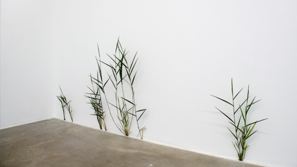 Tony Matelli, Weeds