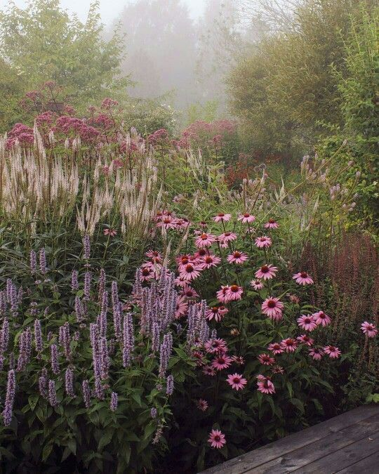 tom-like-these-plants-layered-but-want-it-to-look.jpg