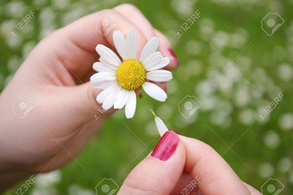 3159966-a-girl-playing-he-loves-me-he-loves-me-not-by-tearing-off-petals-of-a-daisy.jpg
