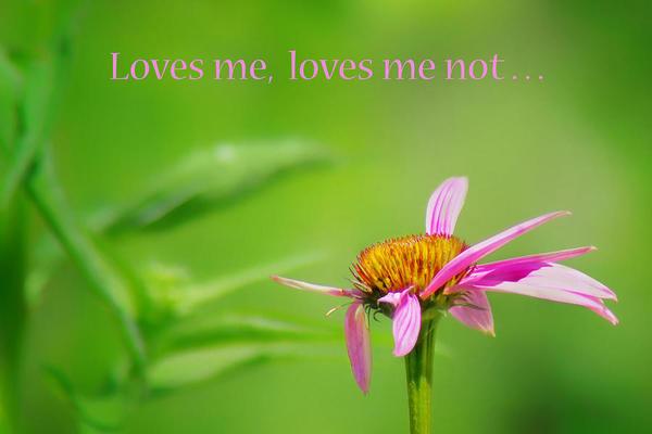 loves-me-loves-me-not-coneflower-nikolyn-mcdonald.jpg