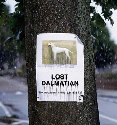 _dalmatian.jpg