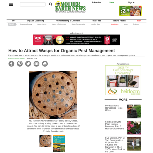 How to Attract Wasps for Organic Pest Management | MOTHER EARTH NEWS