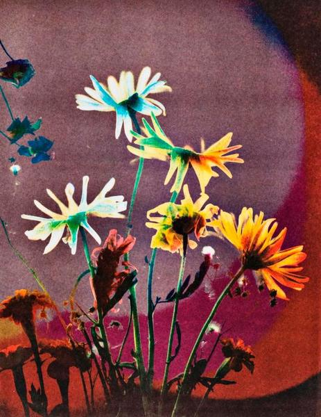 Sonia Landy Sheridan, Process: Color-in-color (flowers), 1976, 3-M Color-in-color process print