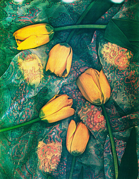 Walter Zimmerman, Floral Study to Italy, 1986, Color photocopy