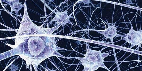 ill_1079403_neurone.jpg