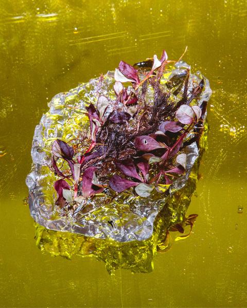 plastiglomerates-plants-artist-allie-wist_670.jpg