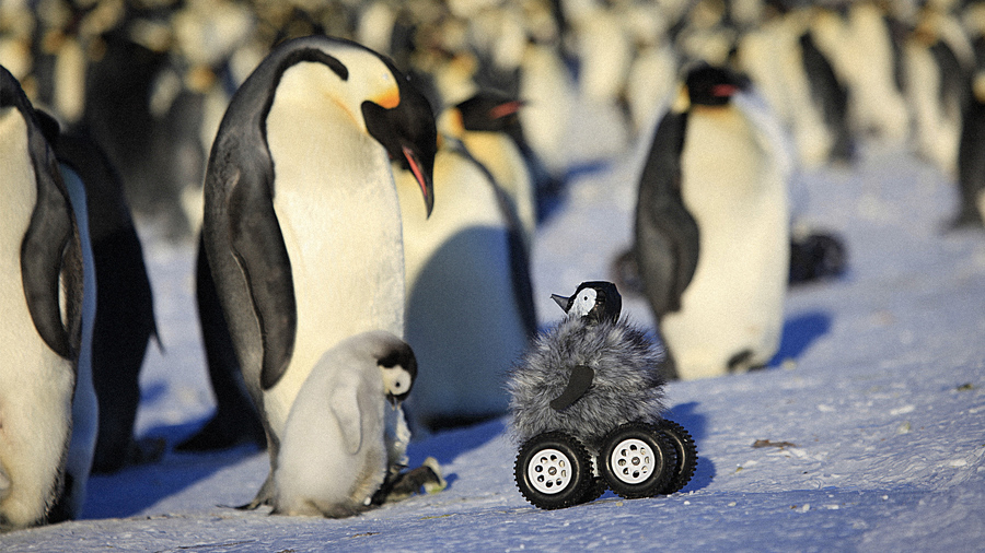 Remote-controlled roving camera camouflaged as a penguin chick in Adelie Land, Antarctica
