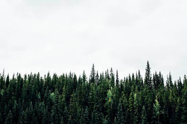 Shopify CEO Tobi Lütke to donate 1,000,001 trees, following one million customer milestone