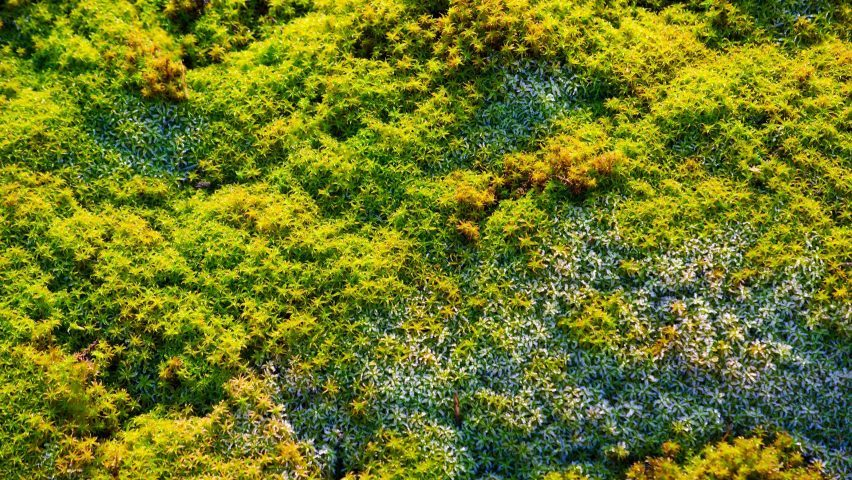 moss-green-wall-plants-pixabay-hero-b-852x480.jpg