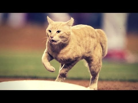 MLB | Animals Running On The Field