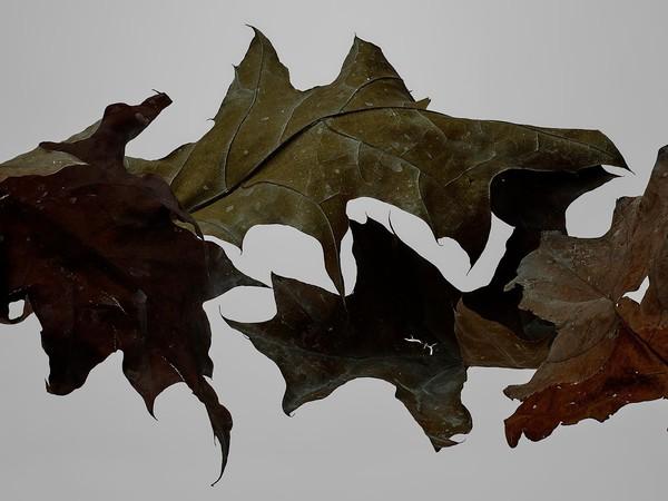 thomasdemonaco-four-chalked-leaves-1599x1200.jpg