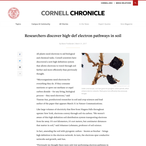 Researchers discover high-def electron pathways in soil | Cornell Chronicle