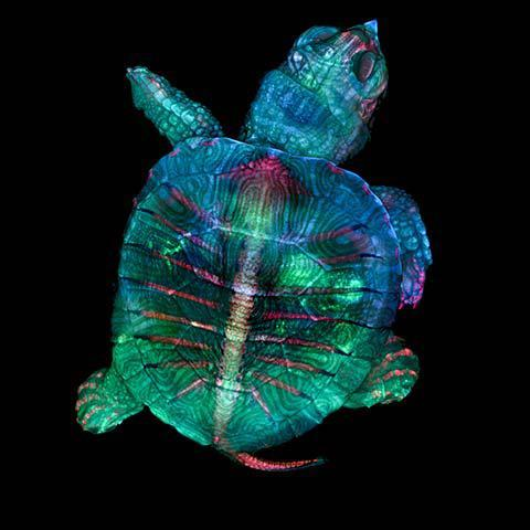 1-zgoda_turtle.jpg