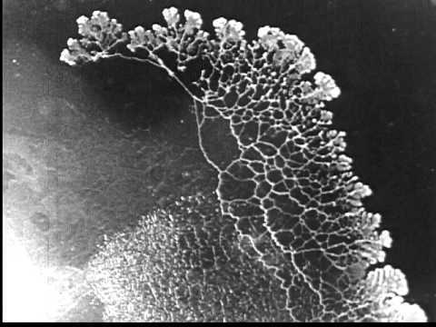 Myxomycetes or Slime Molds (1931)