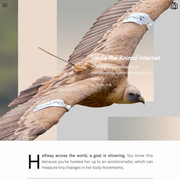 Inside the Animal Internet