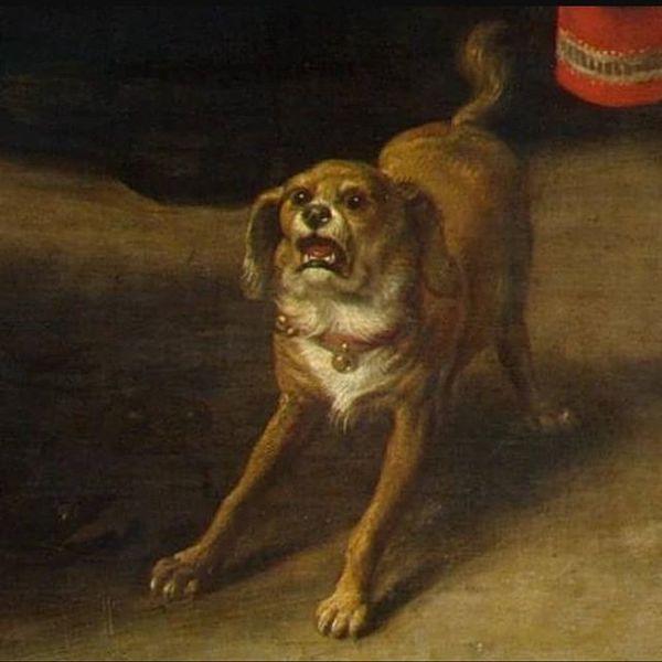 Comment something that shocks and disgusts you #dogsofinstagram #doggo #dogmemes #memes #dogstagram #doggos #doggy #doggosdo...