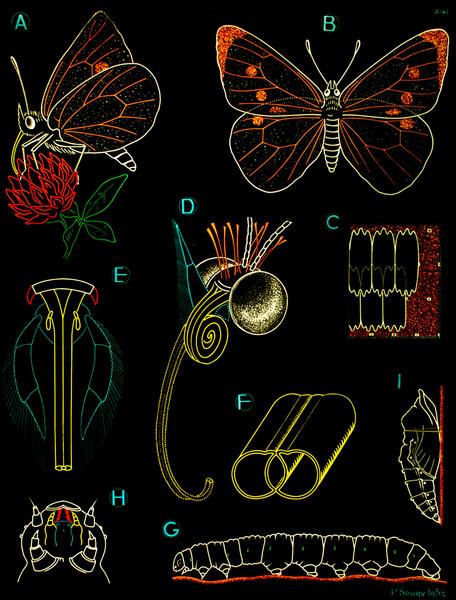 sougy_butterfly.jpg?w=1200-ssl=1