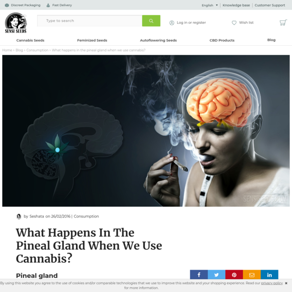 What happens in the pineal gland when we use cannabis?