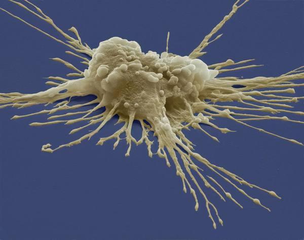pluripotent_stem_cell-56a09b015f9b58eba4b20367.jpg