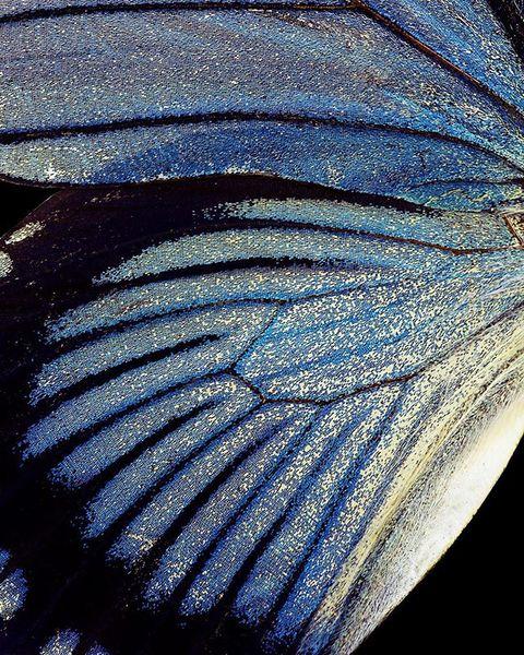 Wings #2.
