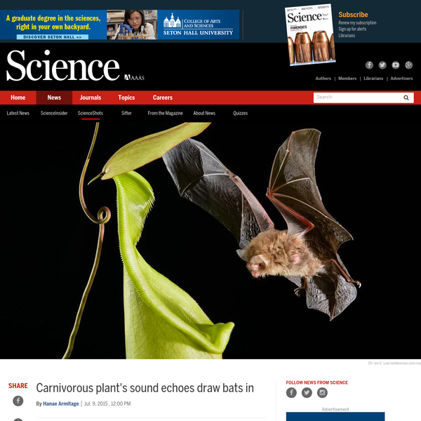 Carnivorous plant's sound echoes draw bats in