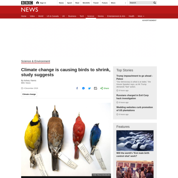 Birds 'shrinking' as the climate warms