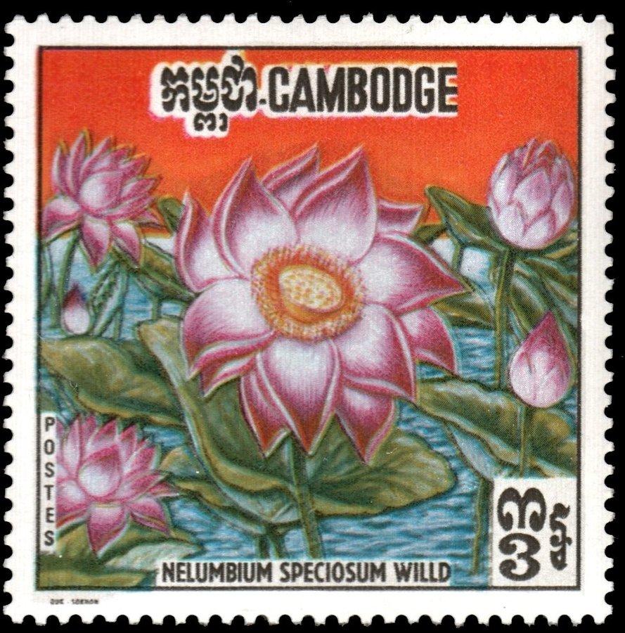 indian-lotus-flower-nelumbium-speciosum.jpg