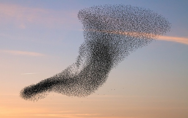 wallpaper-of-a-flock-of-flying-birds-hd-bird-wallpapers.jpg