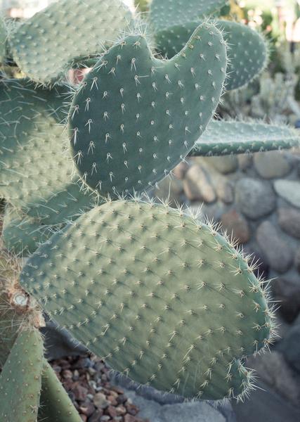 soft-cactus.jpg