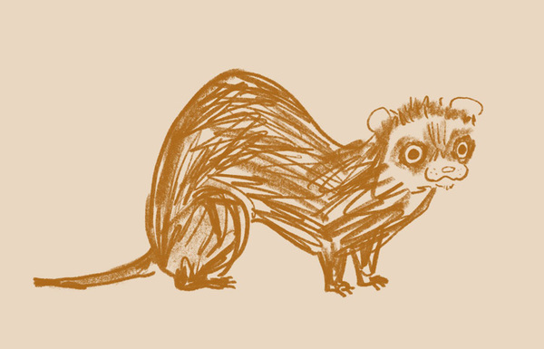 polytechnic_wild_life_drawing_graphic_design_itsnicethat_ferret_alice-bowsher.jpg?1576501749