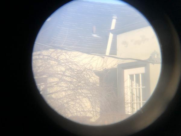 dark-eyed junco (slate)