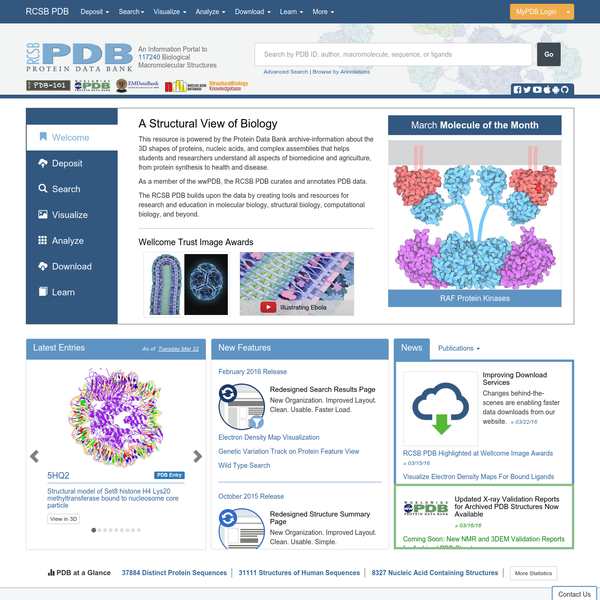 The PDB archive contains information about experimentally-determined structures of proteins, nucleic acids, and complex assemblies. As a member of the wwPDB, the RCSB PDB curates and annotates PDB data according to agreed upon standards. The RCSB PDB also provides a variety of tools and resources.