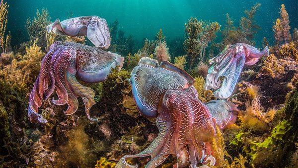 cc_cephalopods_16x9.jpg?itok=q2vbs-rx