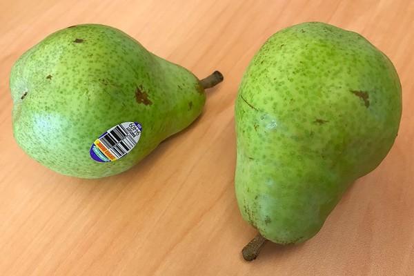 organic-bartlett-pears-05-940x626.jpg