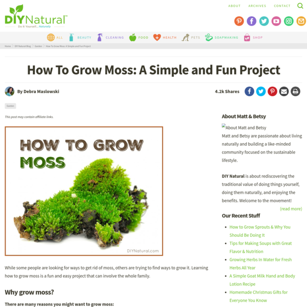 How To Grow Moss: A Simple and Fun Project